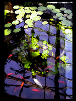 Impression of a Lily Pond